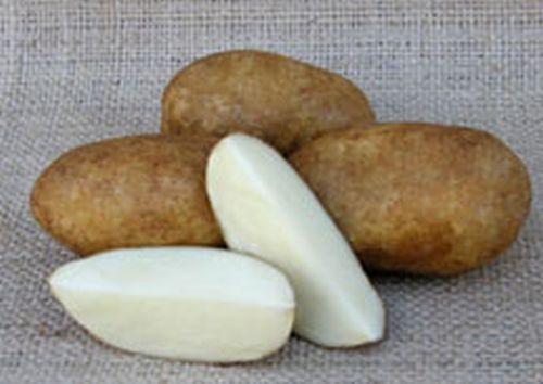 Butte Potato