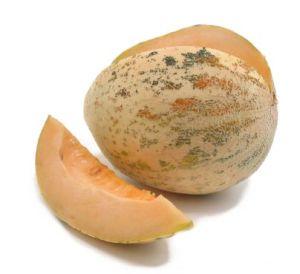 Crane Melon