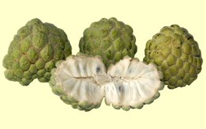 Sugar Apple