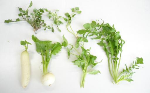 Festival of Seven Herbs