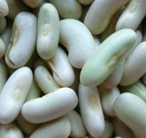 Flageolet Bean