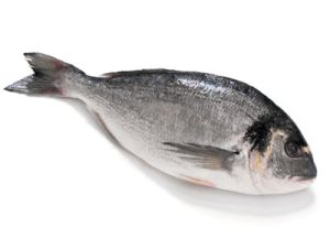 Gilt-Head Bream