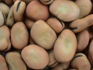 Haba Beans