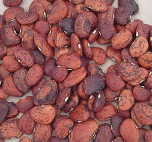Jackson Wonder Beans