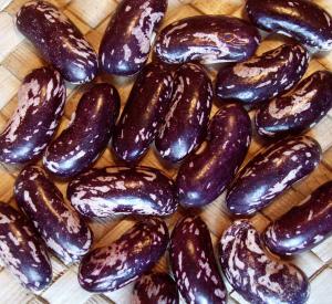 Bush Snap Bean