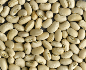 Hutterite Bean