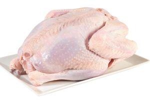 Domestic Turkey