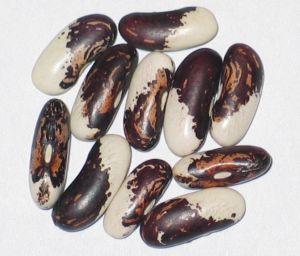 Vermont Appaloosa Beans