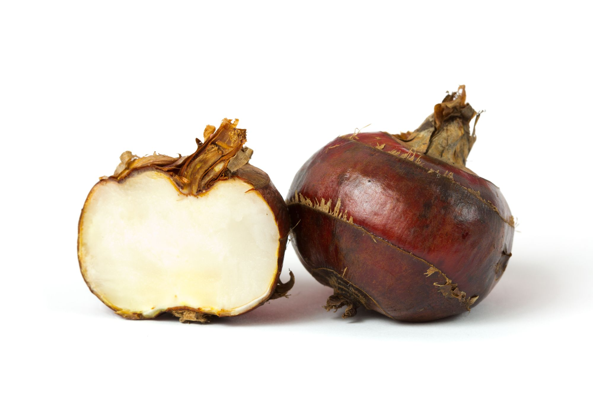 Water Chestnut