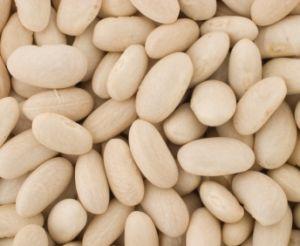 White Emergo Beans