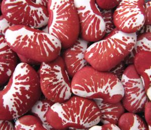 Xmas Lima Beans
