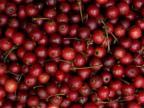Panama berry