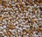 Zuni Gold Beans