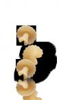 Funghini